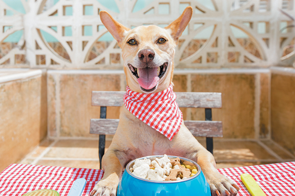 5 Basic Facts About Dog Nutrition